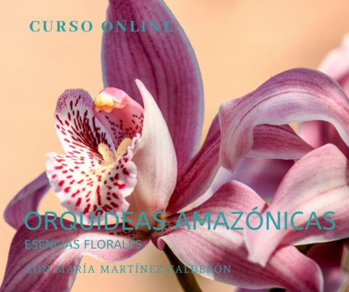 Curso online de esencias de orquideas