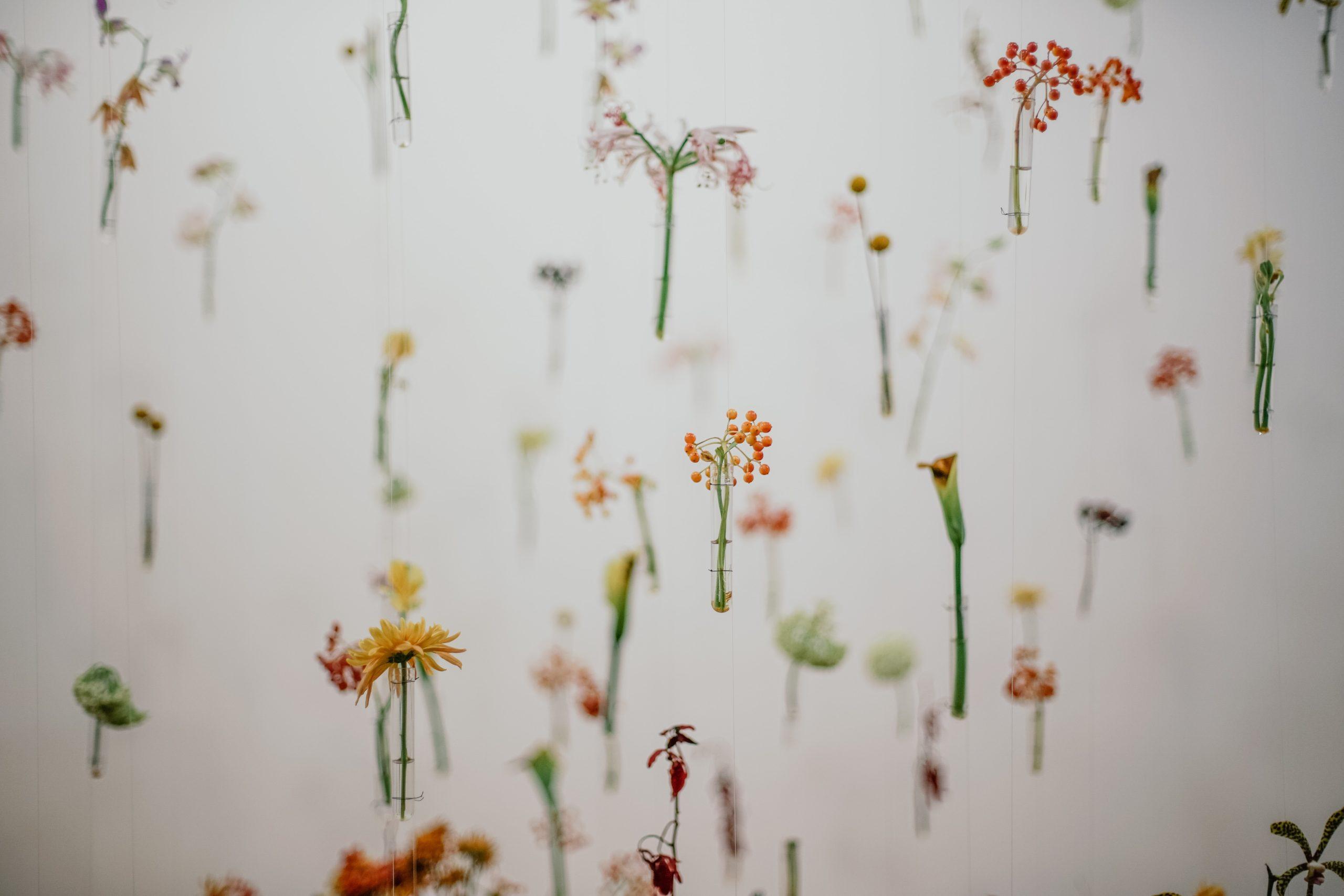que son las flores de bach